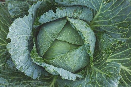 Сколько килограмм в мешке капусты