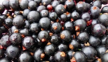 Варенье 5-минутка из черной смородины – 6 простых рецептов