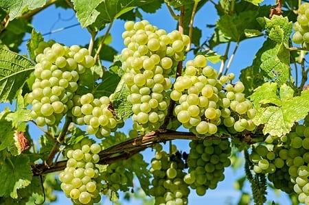 Джем из винограда — 5 простых рецептов на зиму