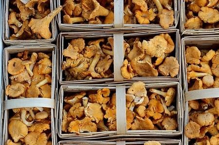 Сколько нужно варить грибы перед заморозкой
