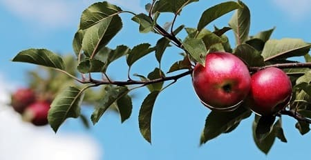 Яблочный компот — 12 простых рецептов на зиму